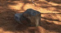 small rock in bark mulch